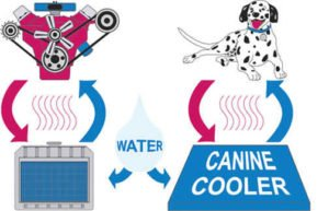 caninecooler