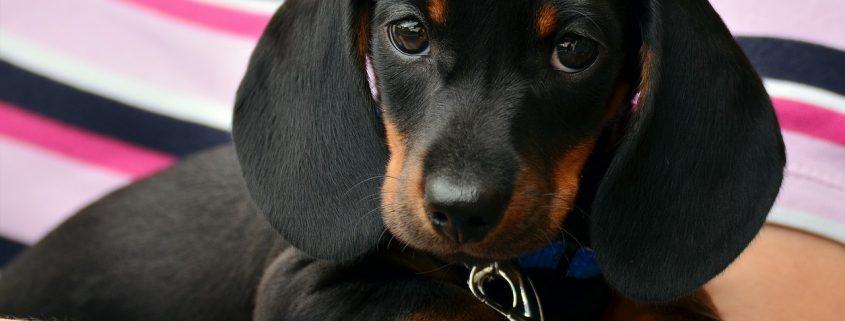 avvelenamento cani