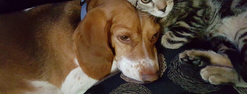 cistite cane gatto cure naturali