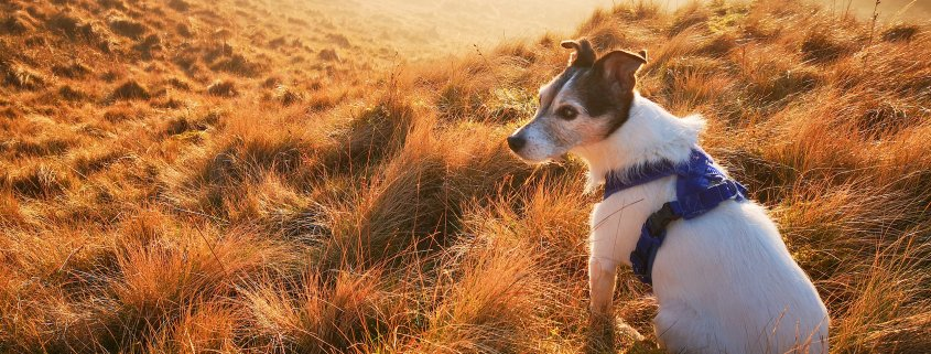 anni dei cani in anni umani