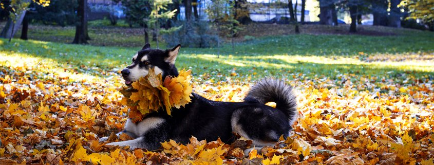 cani in autunno