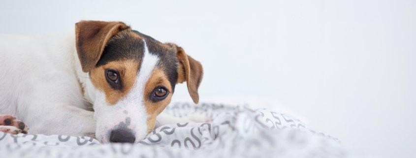 Insegnare al cane a fare i bisogni sulla traversina